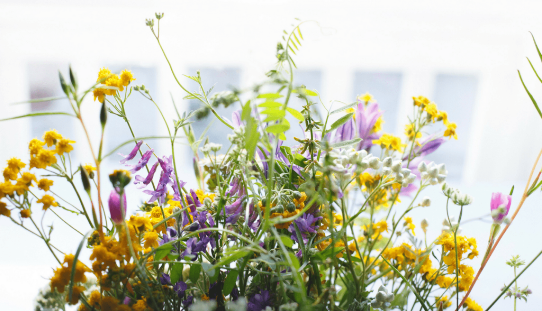 Blog Luna Herbs Wildkräuter_8 sekundäre Pflanzenstoffe die Du kennen solltest