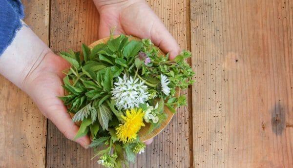 Blog Luna Herbs Wildkräuter_Wildkräuter sammeln – so geht's richtig