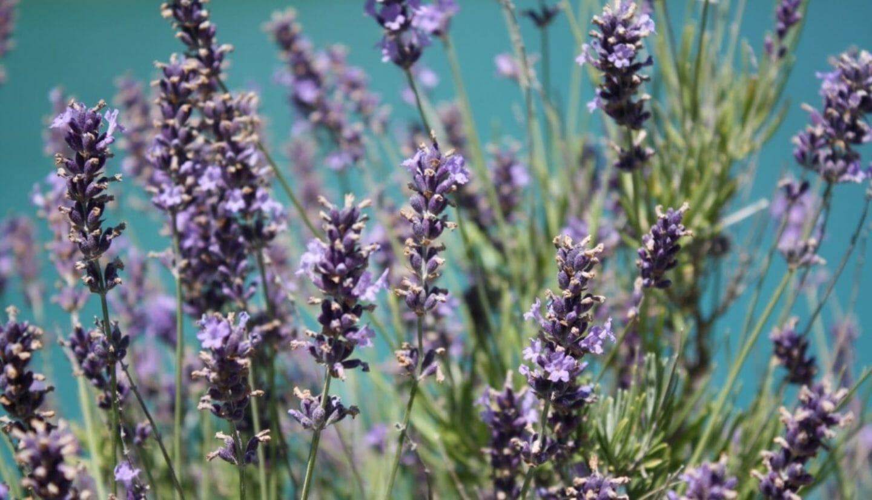 Luna Herbs_Wildkräuter Blog_ 8 sekundäre Pflanzenstoffe die Du kennen solltest1