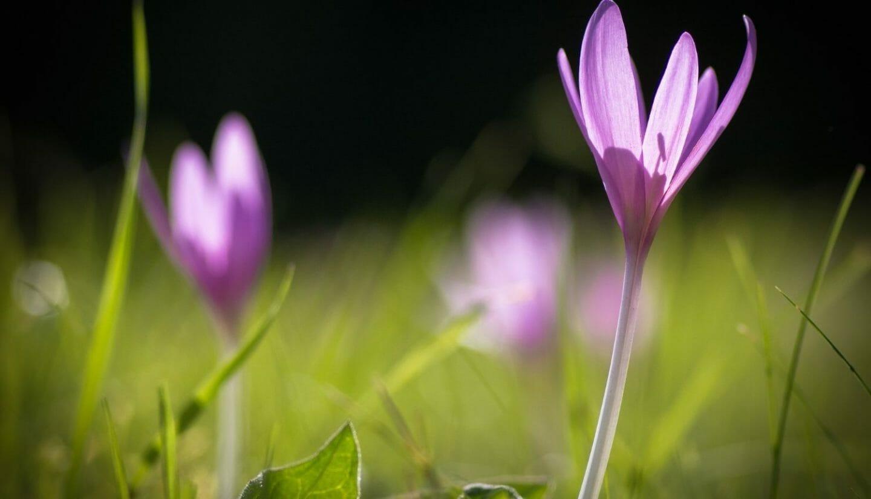 Luna Herbs_Wildkräuter Blog_ 8 sekundäre Pflanzenstoffe die Du kennen solltest2
