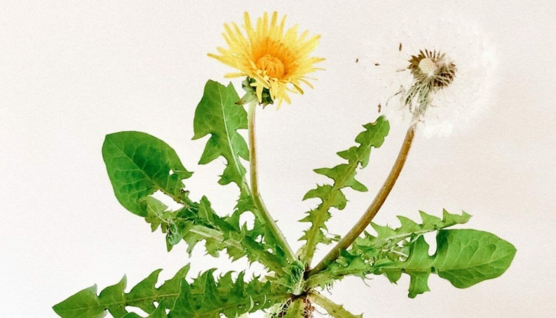 Luna Herbs_Wildkräuter Blog_ 8 sekundäre Pflanzenstoffe die Du kennen solltest3