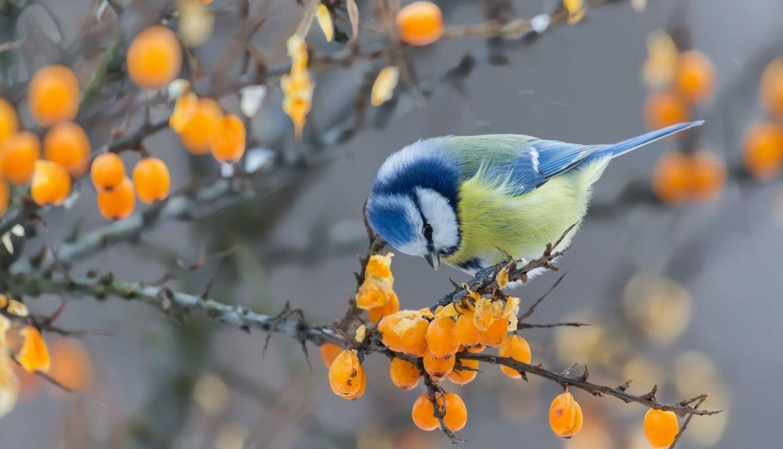Luna Herbs_Wildkräuter Blog_ 8 sekundäre Pflanzenstoffe die Du kennen solltest4