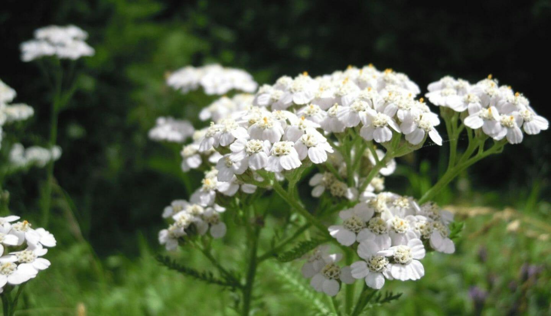 Luna Herbs_Wildkräuter Blog_ 8 sekundäre Pflanzenstoffe die Du kennen solltest5