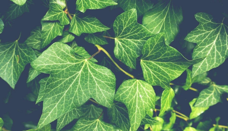 Luna Herbs_Wildkräuter Blog_ 8 sekundäre Pflanzenstoffe die Du kennen solltest6