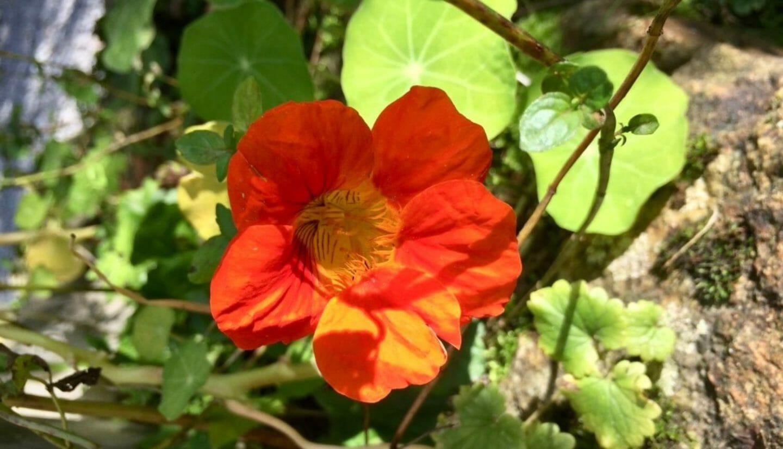 Luna Herbs_Wildkräuter Blog_ 8 sekundäre Pflanzenstoffe die Du kennen solltest8