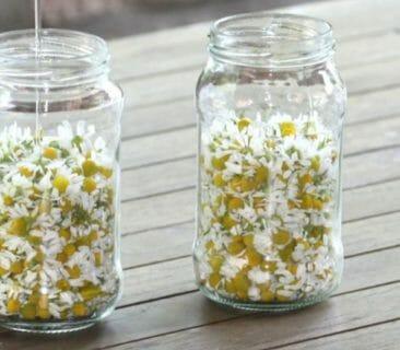 Blog Luna Herbs Wildkräuter_Grundrezept Öl Mazerat selber herstellen