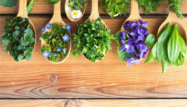 Blog Luna Herbs Wildkräuter_Die besten Bezugsquellen für Wildkräuter und Naturkosmetik