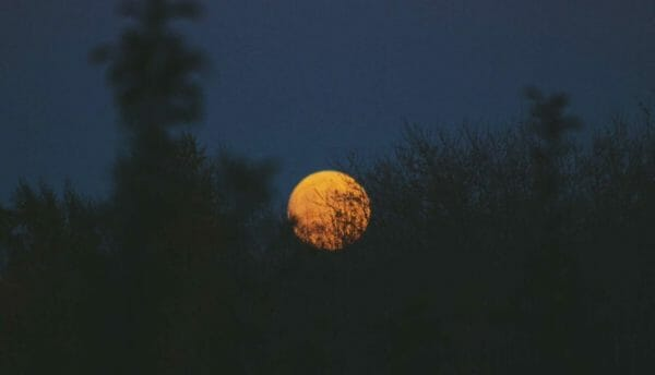 Luna Herbs_Wildkräuter Blog_die sechste Rauhnacht