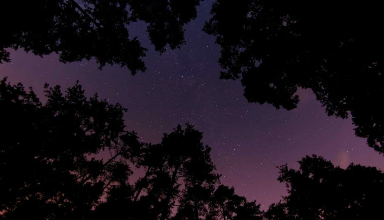 Luna Herbs_Wildkräuter Blog_die achte Rauhnacht