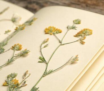 Blog Luna Herbs Wildkräuter_So legst du dein eigenes Herbarium an