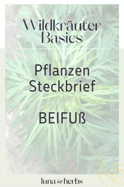 Pinterest_Luna Herbs_Wildkräuter Blog_Beifuß Pflanzensteckbrief9