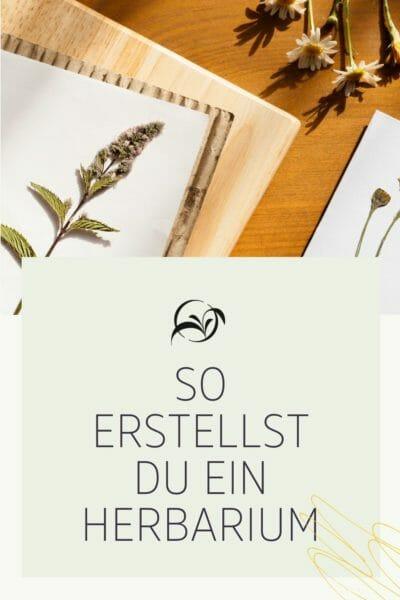 Pinterest_Lunaherbs Wildkräuter Blog_So erstellst ud ein Herbarium