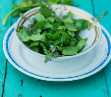 Blog Luna Herbs Wildkräuter_einfache Wildkräuter Rezepte