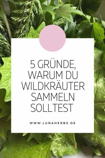 Pinterest_5 Gründe, warum du Wildkräuter sammeln solltest