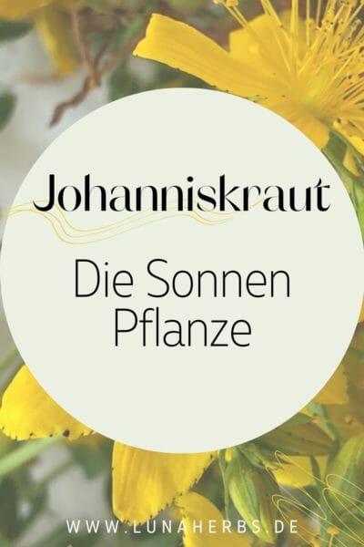 Pinterest_Blog Luna Herbs Wildkräuter_Steckbrief Echtes Johanniskraut