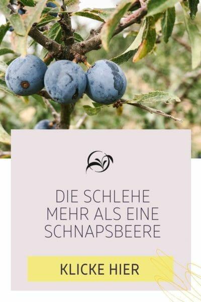 Pinterest_Pflanzensteckbrief - Gewöhnliche Schlehe
