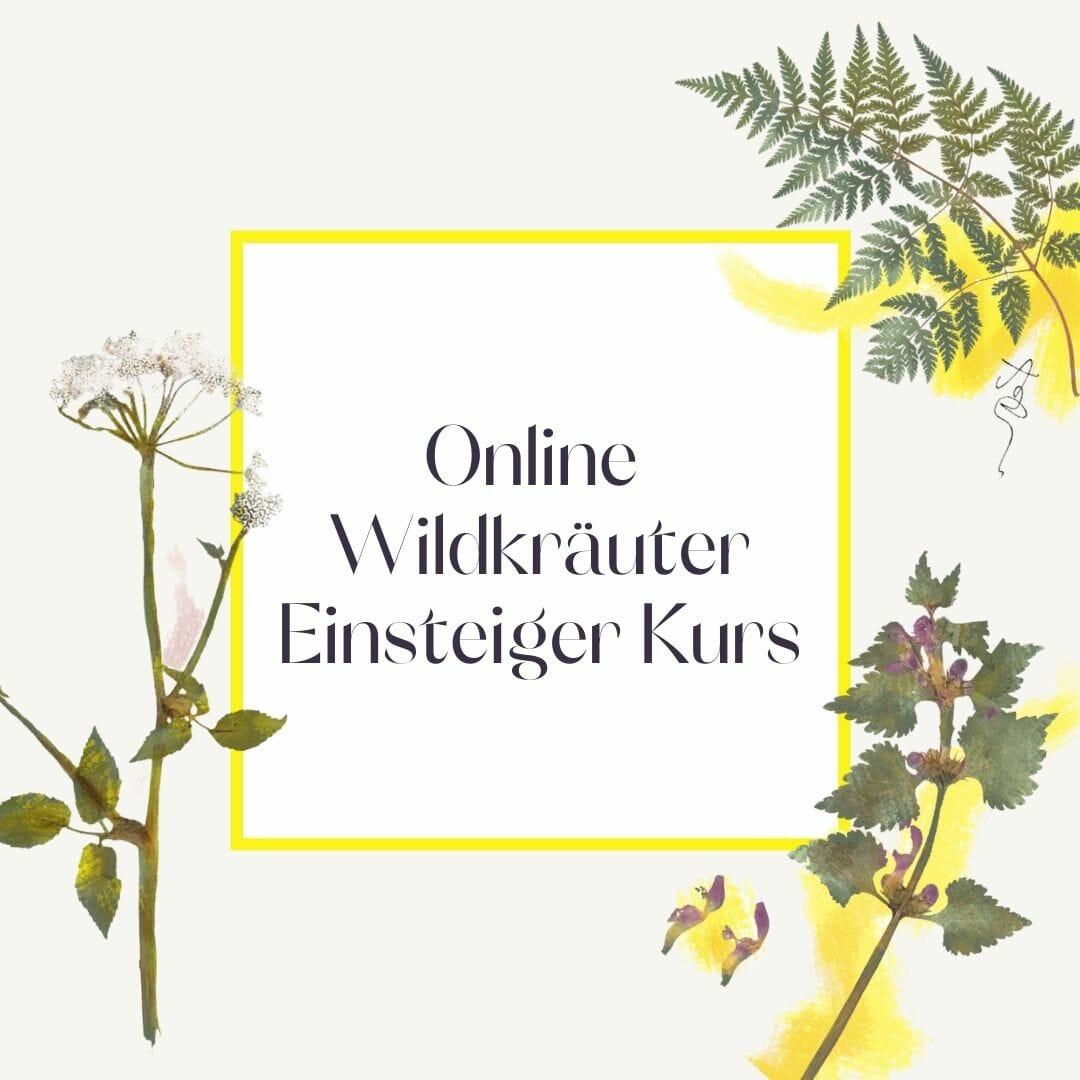 Luna Herbs Wildkräuter Blog_Online Wildkräuter Einsteigerkurs
