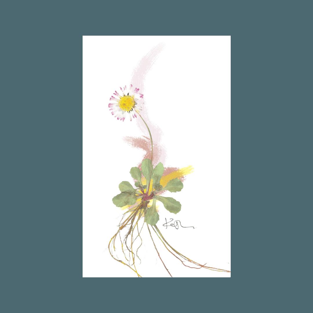 Luna Herbs_Wildkräuter Blog_Startseite_Gänseblümchen
