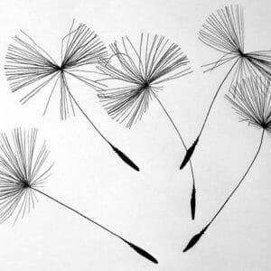 seeds-641520_640 (1)