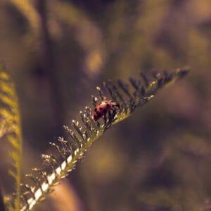 beetle, ladybug, dusk