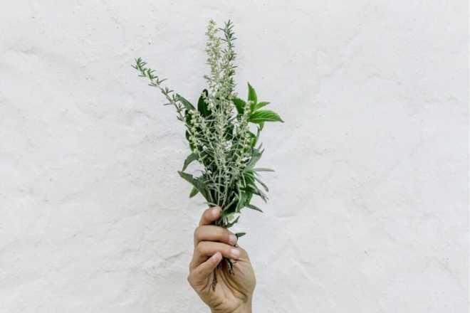 Luna Herbs Wildkräuter sammeln und erkennen mit dem Wildkräuter Sammelkalender
